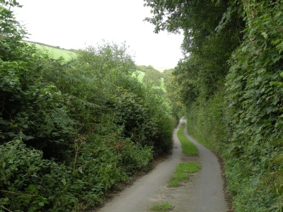 Looking back up Buttercombe lane