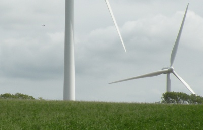 Bird flying past turbine blade
